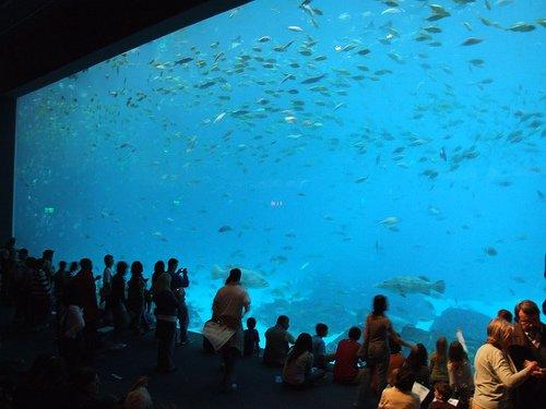 aquarium nature oc 233 ane