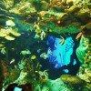 Aquarium………!