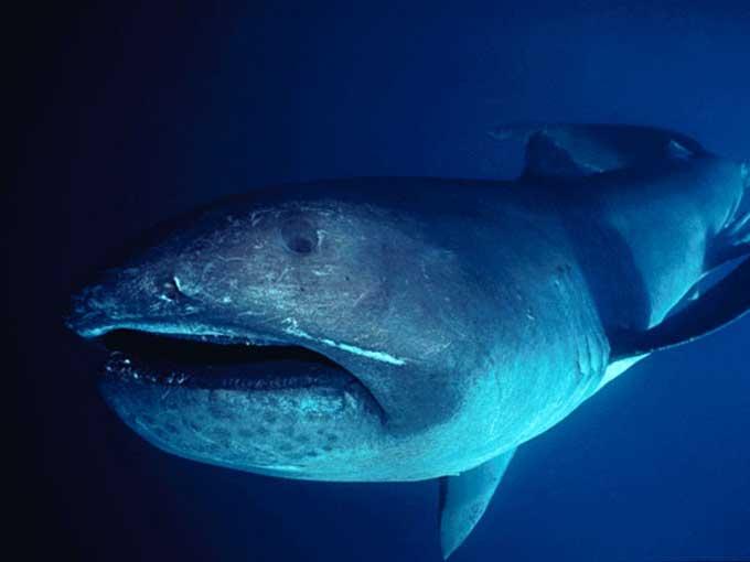 requingrandegueule2.jpg