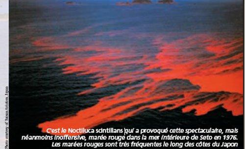 mrouge01.jpg